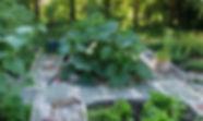 Our 2019 Garden.jpg
