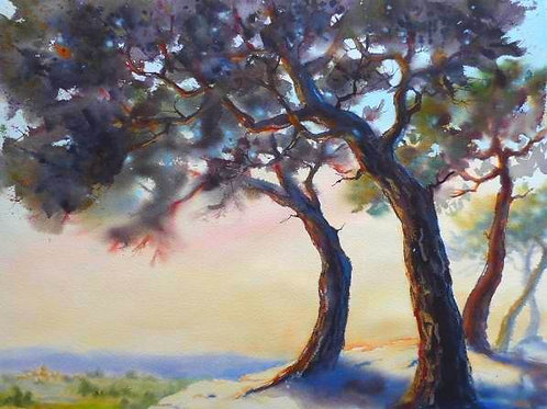 Les pins surplombant la plaine