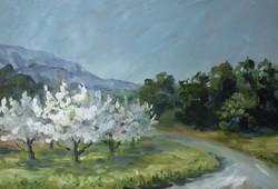 Cerisier route de Lafare