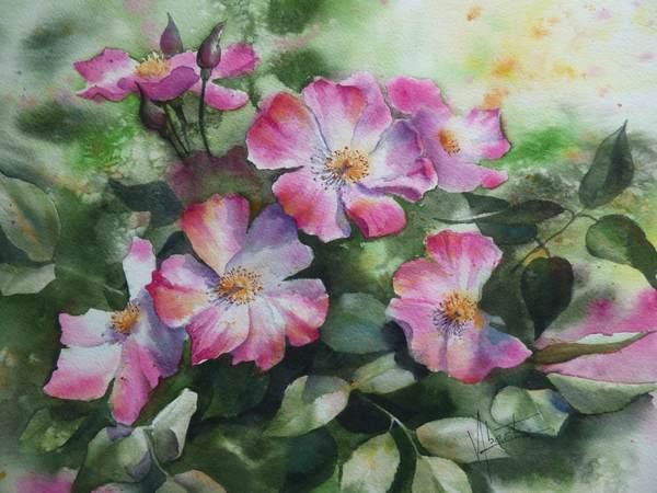 Roses églantine