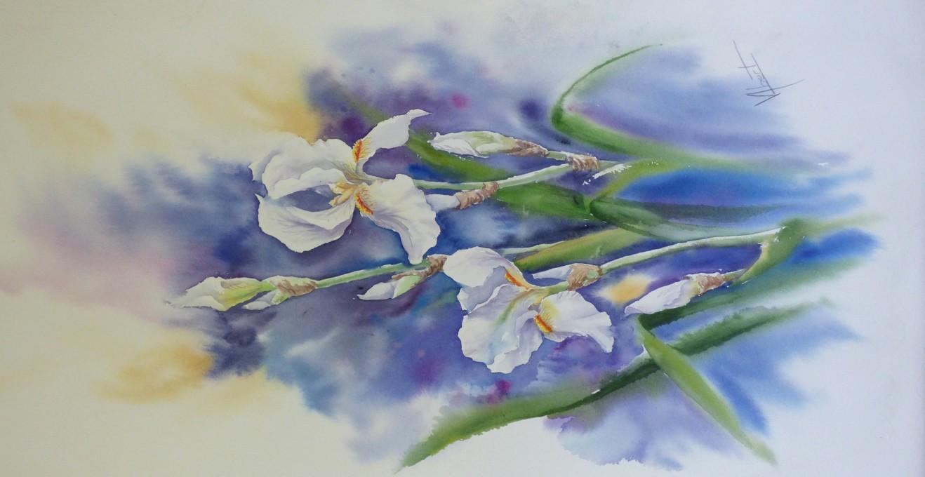 Iris(2)