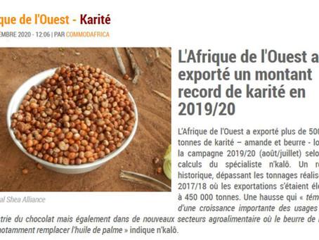 Développement des exportations de Karité en Afrique : attention à ne pas épuiser la ressource.