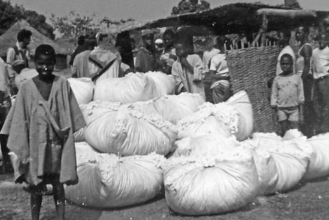 production coton Guinée-marché coton à Gaoual