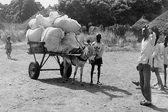 Production Coton Guinée-transport coton vers marché coton-Gaoual