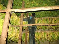Culture de tabac virginie au Laos-Pente tabac dans four-Nanam