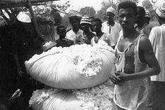 Production Coton Guinée-pesée coton sur marché coton-Kamélé