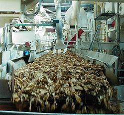 filière agricole-Chaine de battage du tabac-Mahajanga-Madagascar