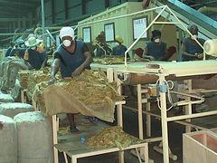 Filière tabac Madagascar-intro tabacs