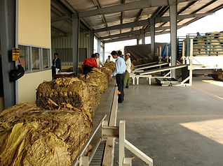 Production tabac au Laos-achat tabacs-site de Vientiane