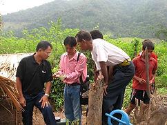 Culture de tabac virginie au Laos-suivi technique pépinières-Pakkbeng