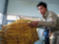 Production tabac au Laos-achat tabacs-site de Vientiane-pesée