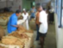 Filière tabac Madagascar-Agréage tabacs