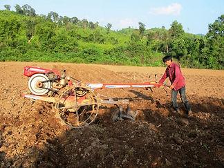 Filière tabac-mécanisation labour-Laos