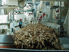 Filière tabac Madagascar-sortie vibrant batteuse.jpg