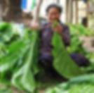 Filière tabac-enfilage feuille Virginie-Laosg.jpg
