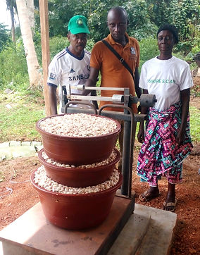 Cacao bio-Côte d'Ivoire -première journée collecte
