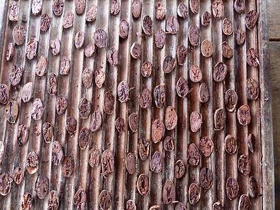 cacao aromatique Côte d'Ivoire-Test de coupe.
