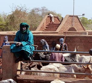 filières aricoles-marché au bétail-Fada Ngourma-Burkina Faso