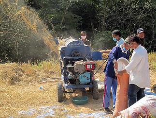 Filière riz-mécanisation battage-Laos