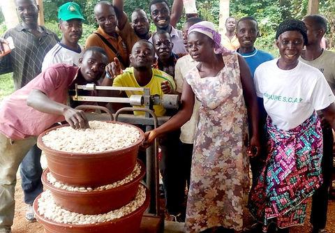 Cacao Bio Côte d'Ivoire-première journée collecte