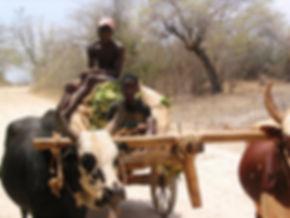 Production tabac madagascar -transport tabac