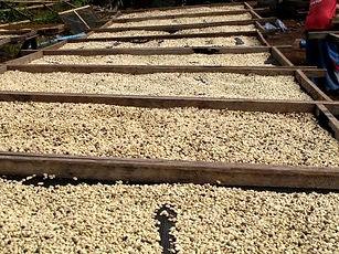 filières agricoles-séchage café au laos