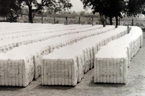 production coton Guinée-bales en attente à Velingara