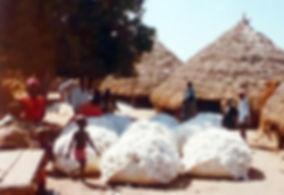 Filière coton Guinée Bissau-marché_coton_bafata.jpg