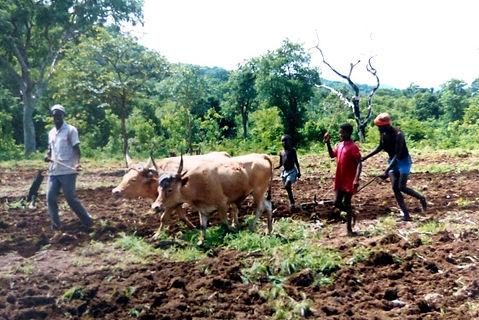 projet développement Rural Gaoual-Kundara-labour