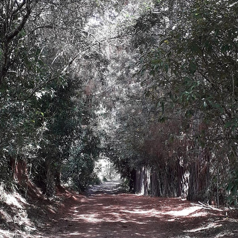 Caminhos da Fazenda