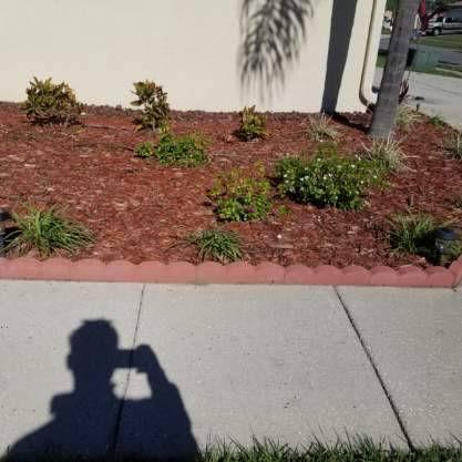 Paver Border Plants Mulch.jpg
