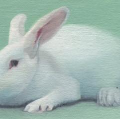 White Rabbit 30