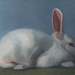 White Rabbit 17