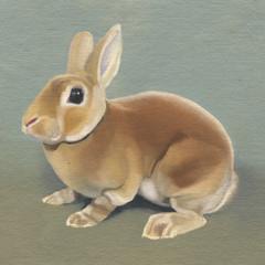 Brown Rabbit 20