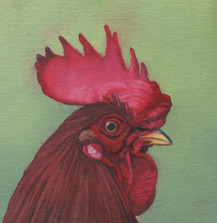 Rooster 9