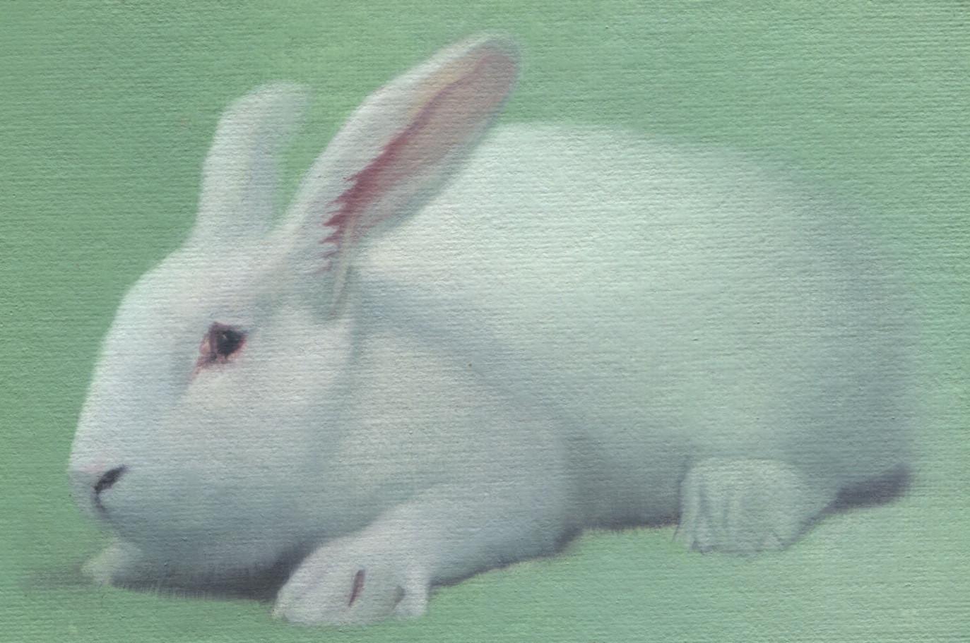 White Rabbit 32