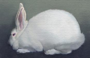 White Rabbit 28