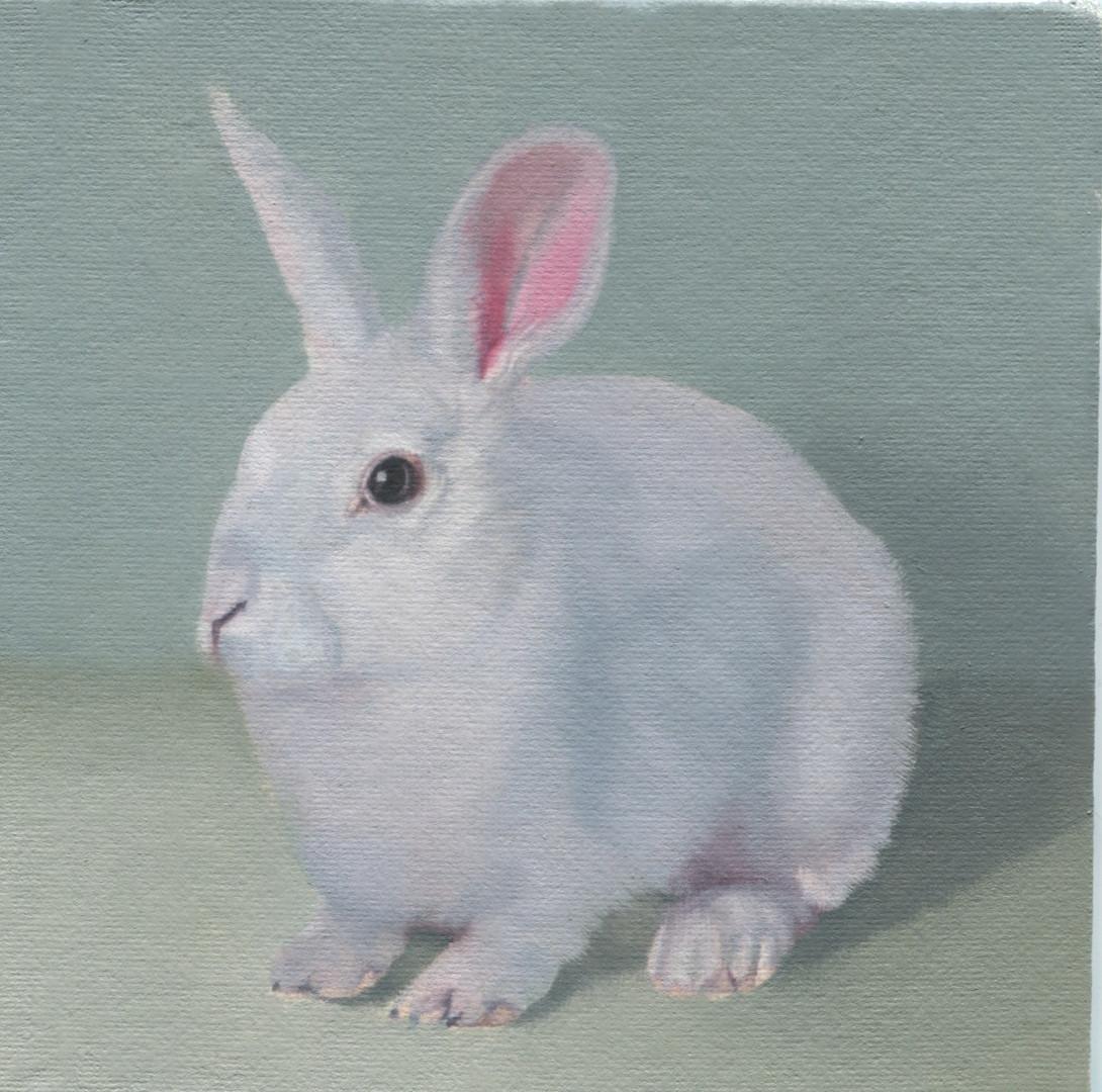 White Rabbit 41