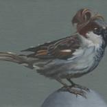 Sparrow with Manbun 1