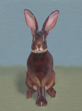 Brown Rabbit 34