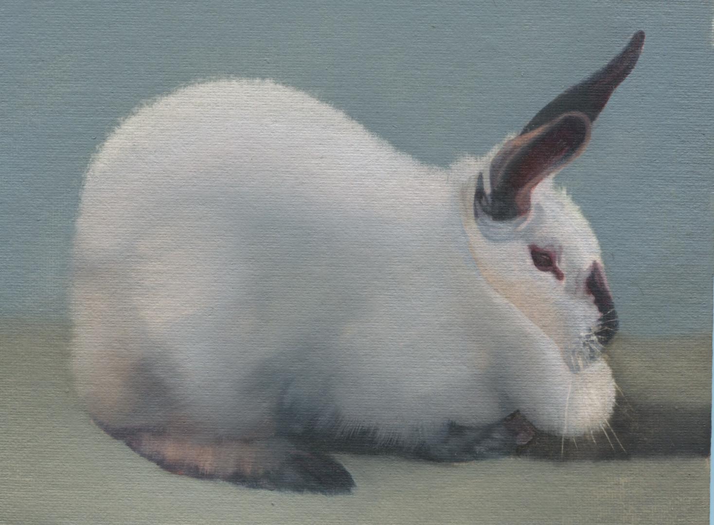 White Rabbit 45