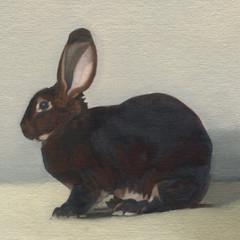 Brown Rabbit 10