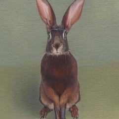 Brown Rabbit 17
