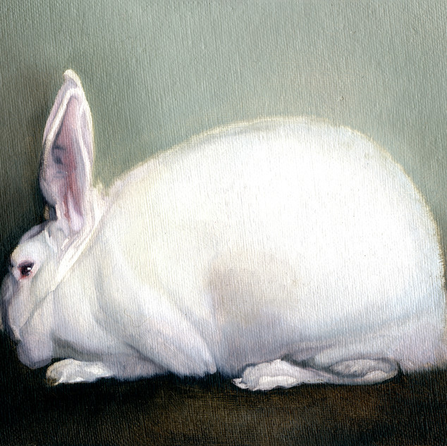 White Rabbit 2