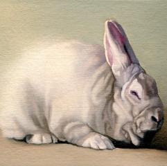 White Rabbit 8
