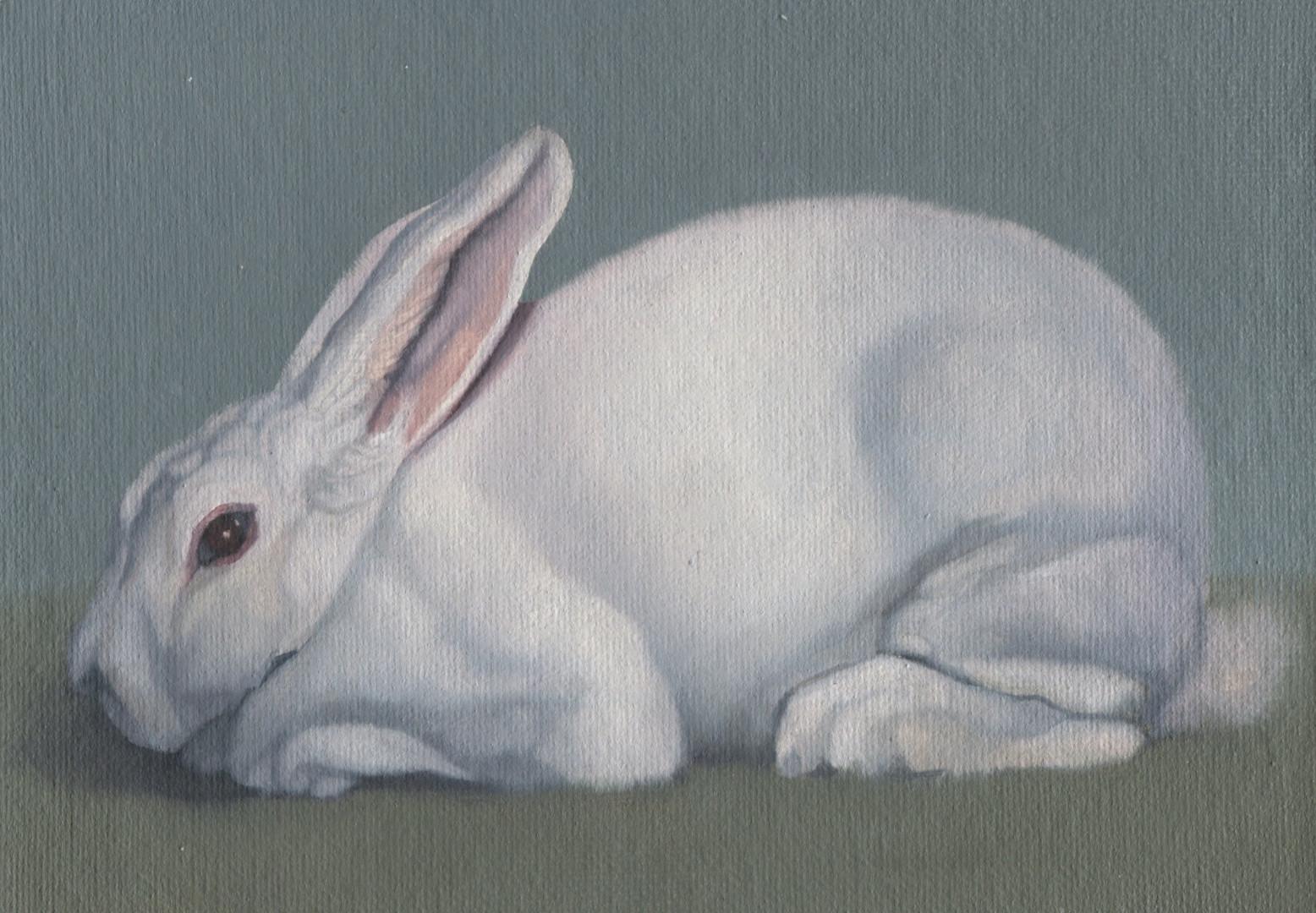 White Rabbit 25