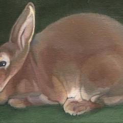 Brown Rabbit 4