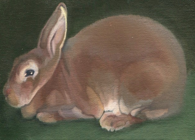 Brown Rabbit 4