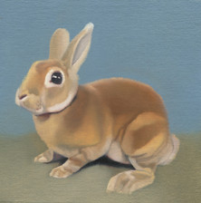 Brown Rabbit 27
