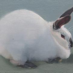 White Rabbit 21